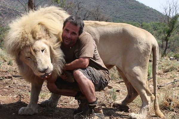 when work becomes pleasure 18 pics of lion whisperer from south africa 15