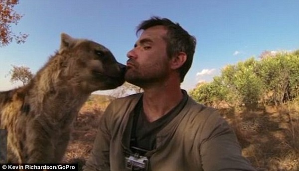 when work becomes pleasure 18 pics of lion whisperer from south africa 18