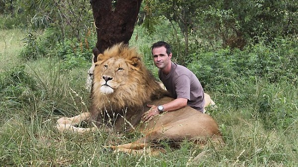 when work becomes pleasure 18 pics of lion whisperer from south africa 2