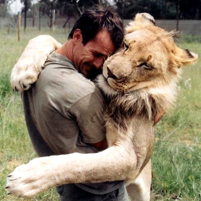 when work becomes pleasure 18 pics of lion whisperer from south africa 3