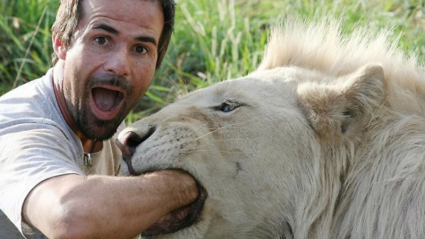 when work becomes pleasure 18 pics of lion whisperer from south africa 7