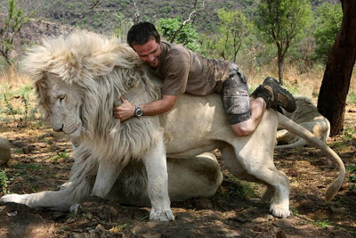 when work becomes pleasure 18 pics of lion whisperer from south africa 8