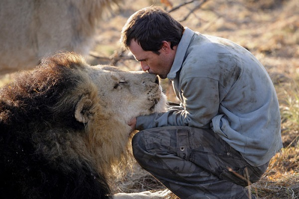 when work becomes pleasure 18 pics of lion whisperer from south africa 9