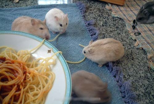 while they are stealing food they will steal your heart  15 pictures 14