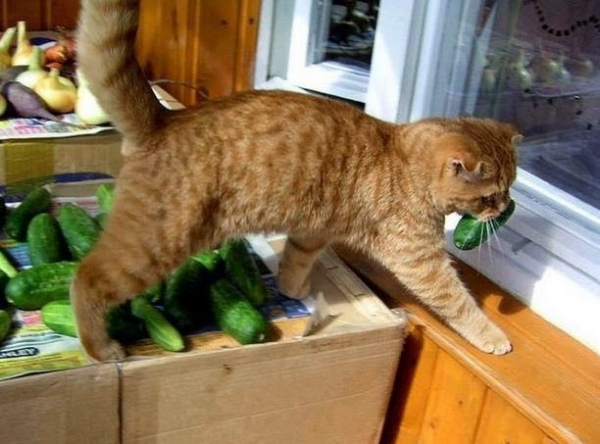 while they are stealing food they will steal your heart  15 pictures 3