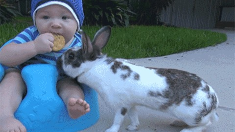 while they are stealing food they will steal your heart  15 pictures 9