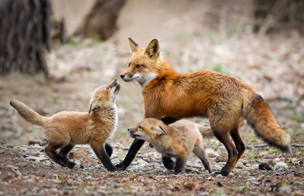who are the best fathers in the animal kingdom 10 pictures 2