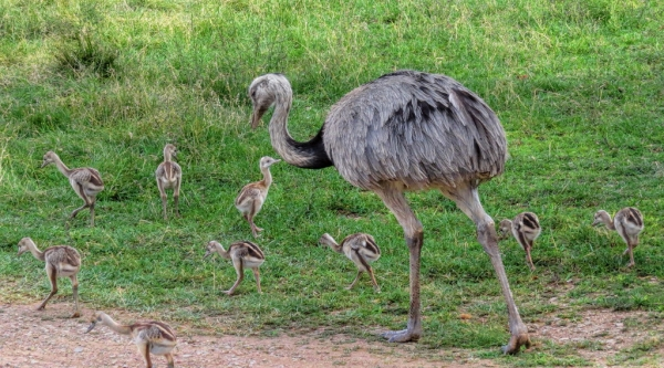 who are the best fathers in the animal kingdom 10 pictures 4