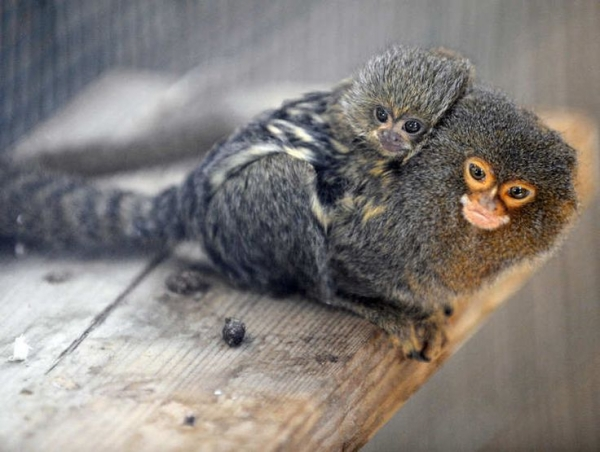 who are the best fathers in the animal kingdom 10 pictures 5