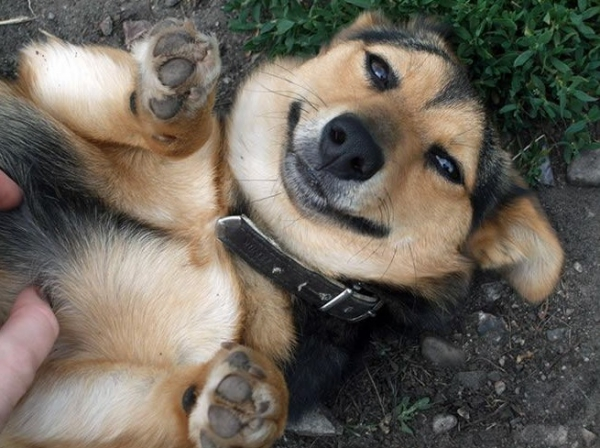 who doesnt like a belly rub 15 pictures 2