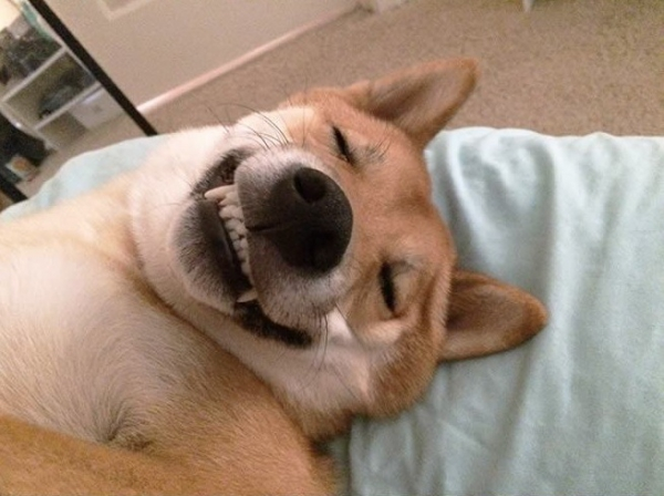 who doesnt like a belly rub 15 pictures 3
