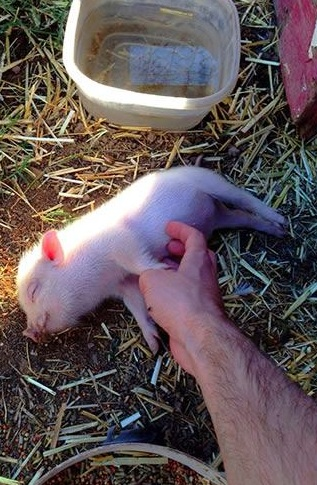 who doesnt like a belly rub 15 pictures 5
