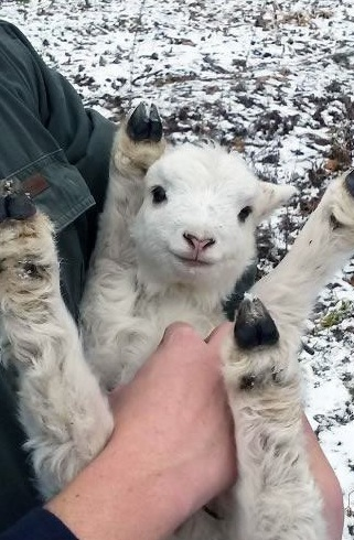 who doesnt like a belly rub 15 pictures 7