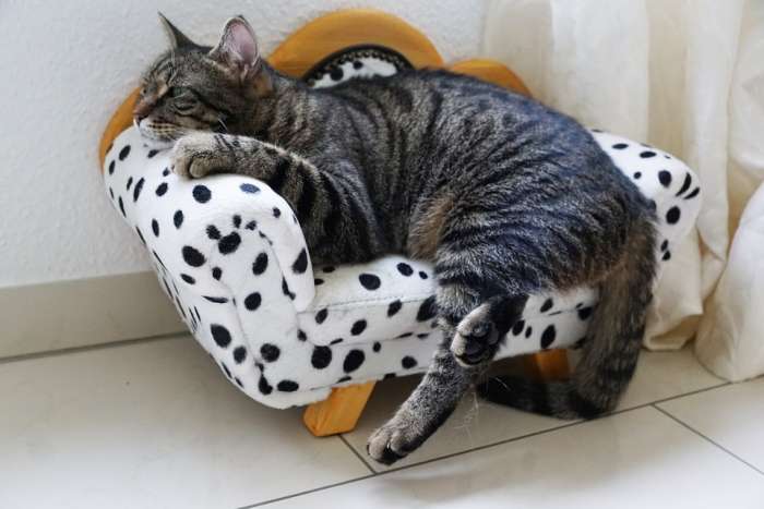 why cats need cat furniture 2