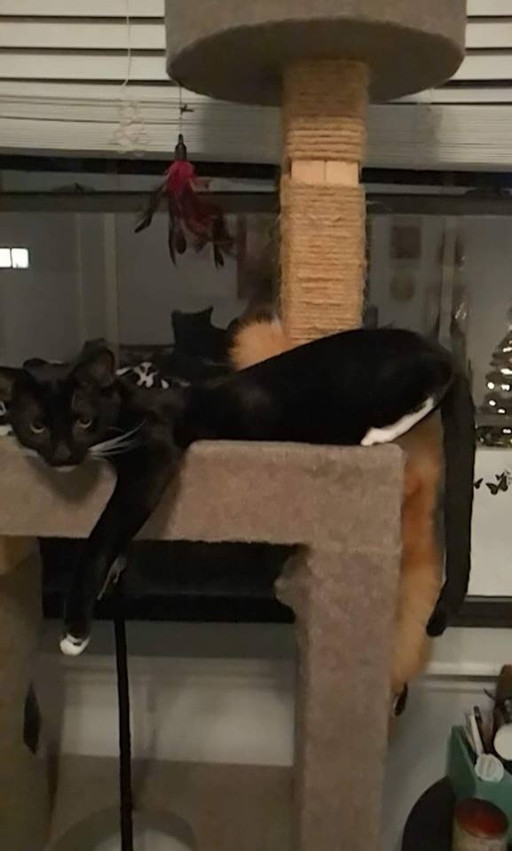 why cats need cat furniture 5