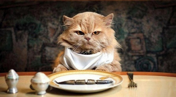 why is your cat a picky eater and what can you do about it 1