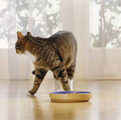 why is your cat a picky eater and what can you do about it 5