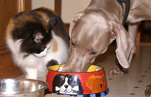 why is your cat a picky eater and what can you do about it 6