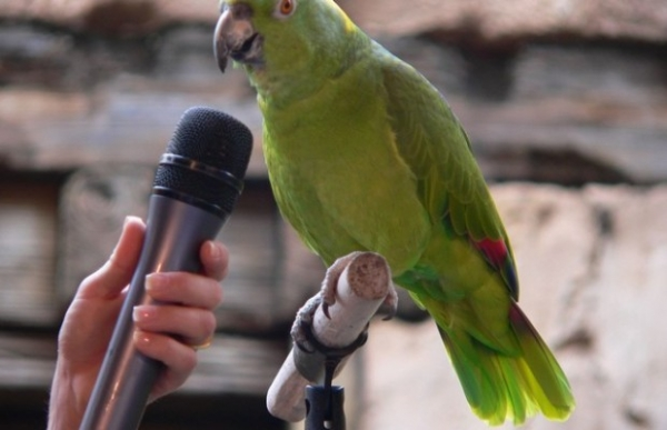 why should a parrot be your next pet 8 pictures 3