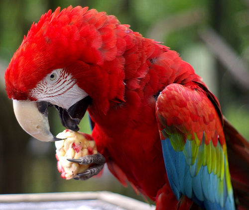 why should a parrot be your next pet 8 pictures 5