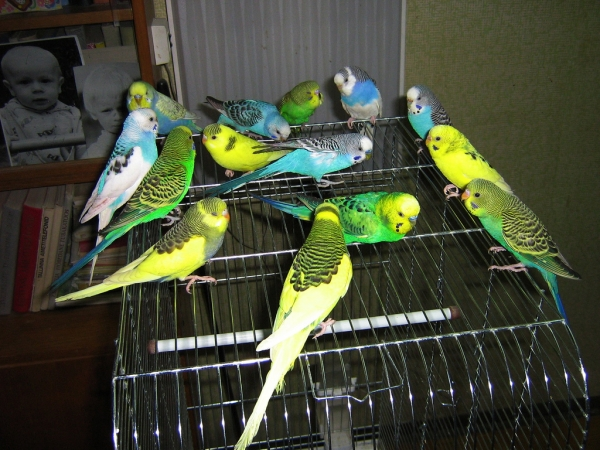 why should a parrot be your next pet 8 pictures 7