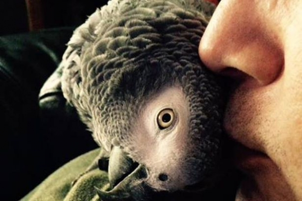 why should a parrot be your next pet 8 pictures 8