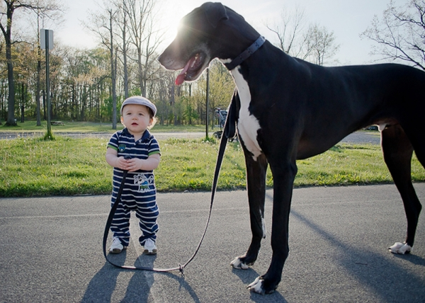 why should your child grow up with a pet 10 pictures 1