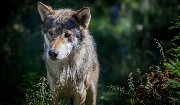 wildlife in coldest place on earth 10 pictures 1