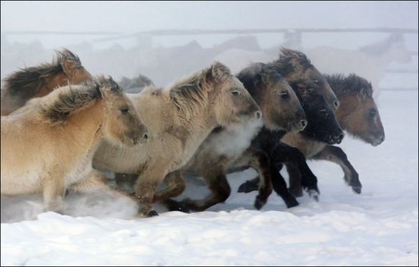wildlife in coldest place on earth 10 pictures 2