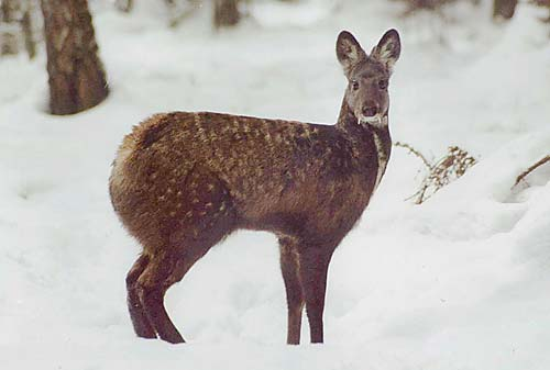 wildlife in coldest place on earth 10 pictures 4
