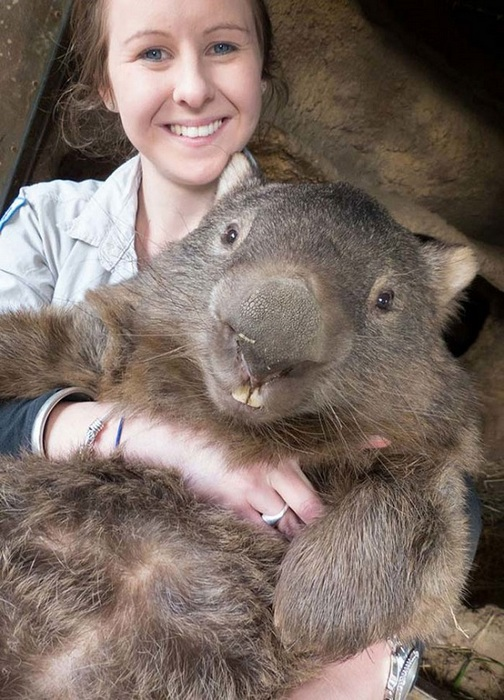 wombat pat is the cutest and fuzziest oldtimer 7 pics 5