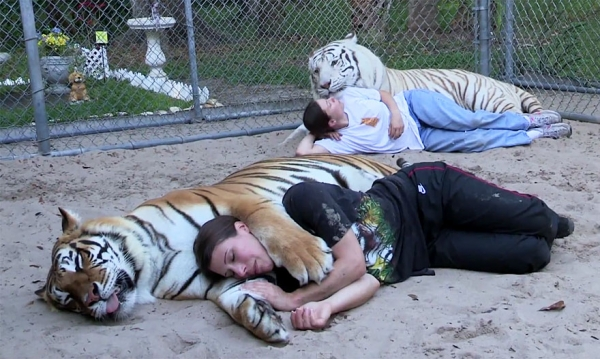 women from orlando sharing her backyard two bengal tigers 11 pics 1 video 1