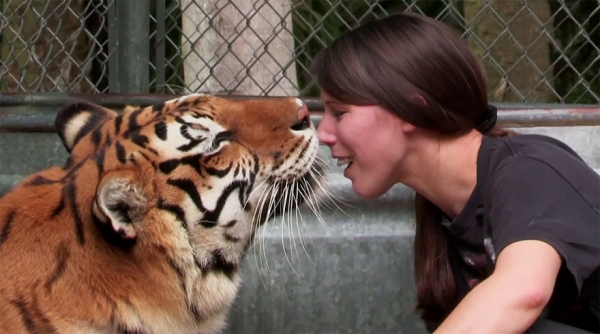 women from orlando sharing her backyard two bengal tigers 11 pics 1 video 10