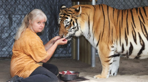 women from orlando sharing her backyard two bengal tigers 11 pics 1 video 8