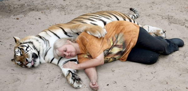 women from orlando sharing her backyard two bengal tigers 11 pics 1 video 9