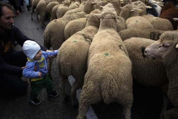 world festivals devoted to animals 23 pictures 20