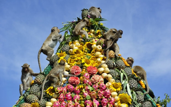 world festivals devoted to animals 23 pictures 3