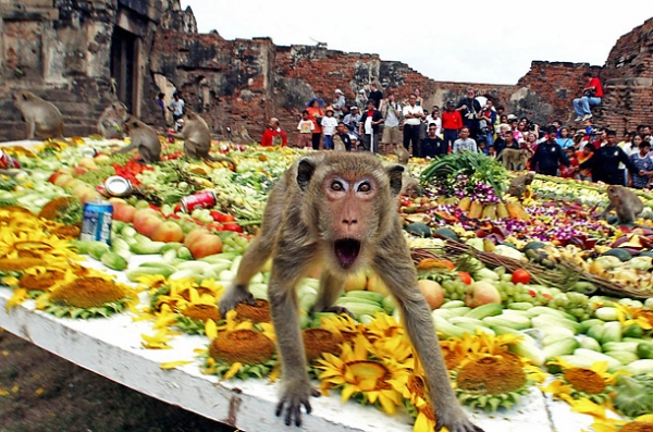 world festivals devoted to animals 23 pictures 4