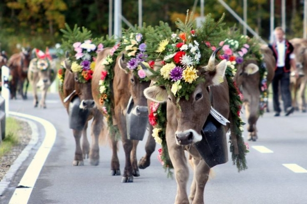world festivals devoted to animals 23 pictures 6