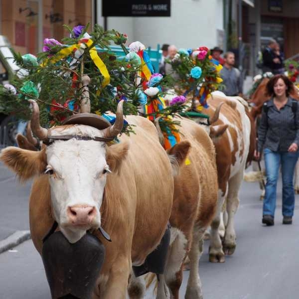 world festivals devoted to animals 23 pictures 9