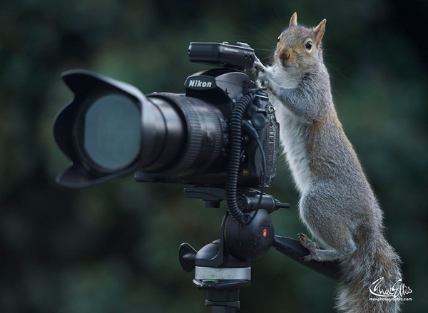 worlds most adorable woodland rodents are also the most curious ones 19 pics 17