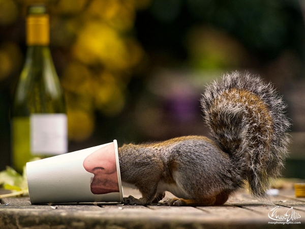 worlds most adorable woodland rodents are also the most curious ones 19 pics 6