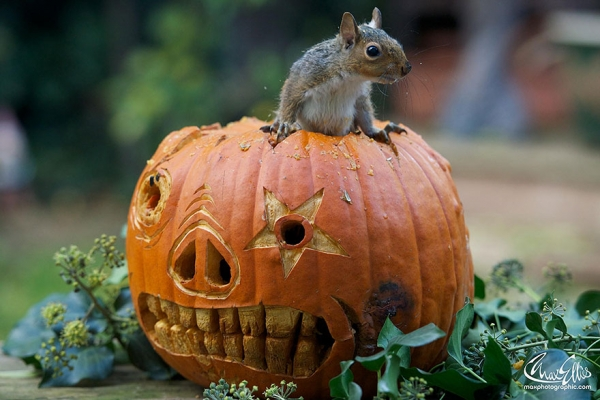 worlds most adorable woodland rodents are also the most curious ones 19 pics 7