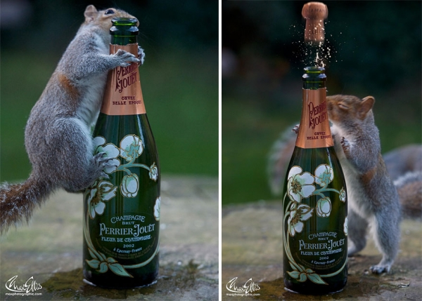 worlds most adorable woodland rodents are also the most curious ones 19 pics 8