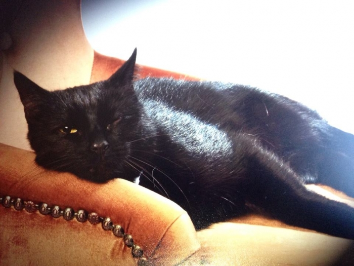 Author: Mary Jane Staek, Description: Black kitty rests in her favorite chair