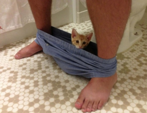 you have a cat forget about your privacy 12 pictures 1 5