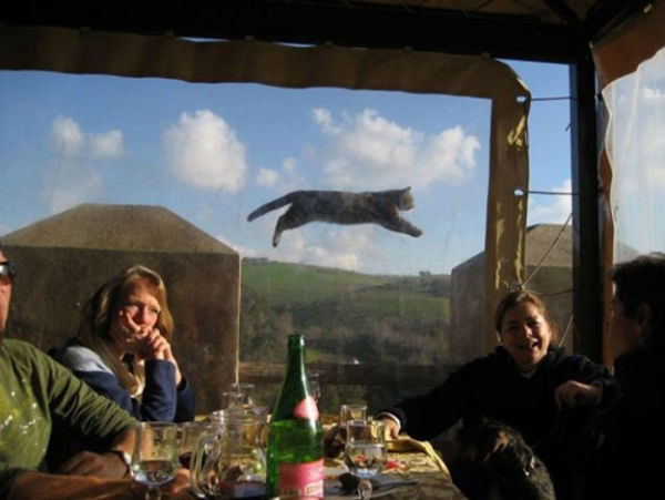 you think cats cant fly think again after you look at these photos 10 pictures 1