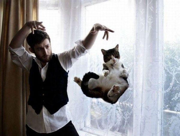 you think cats cant fly think again after you look at these photos 10 pictures 10