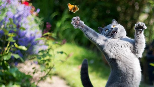 you think cats cant fly think again after you look at these photos 10 pictures 2