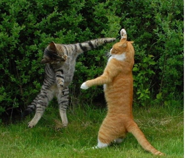 you think cats cant fly think again after you look at these photos 10 pictures 3